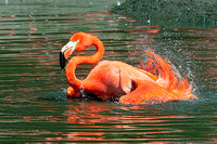 Caribbean Flamingo (WOW!!  that curry was hot)